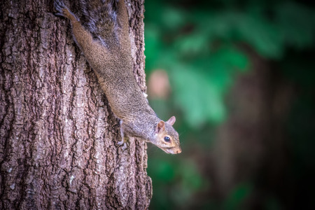 squirrel in the wilderness Imagens