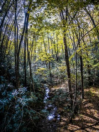 beautiful autumn scenery along viginia creeper trail west virginia