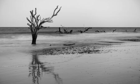 Driftwood and washed out trees at the beach on Hunting Island