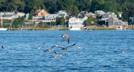 seagulls over Greenwich Bay Harbor Seaport in east greenwich Rhode Island Banco de Imagens