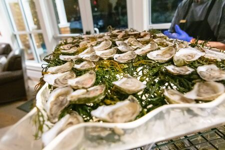 fresh raw oyster bar at an event party