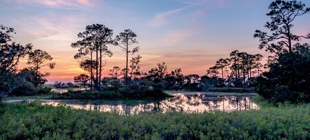 nature landscape scenes around hunting island state park in south carolina 免版税图像