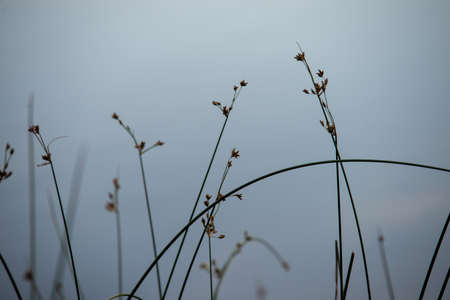 abstract green plants by remote lake