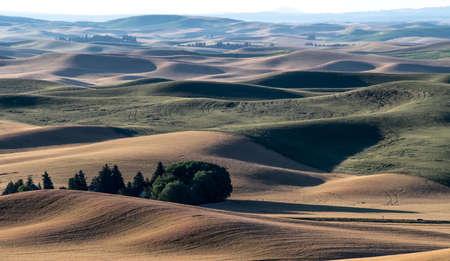 magical wheat farm fields in palouse washington 版權商用圖片 - 153271168