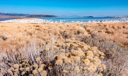 scenery around mono lake in california