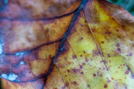 closeup macro of a fallen autumn orange leaf