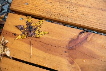 autumn leaf on wooden surface 版權商用圖片