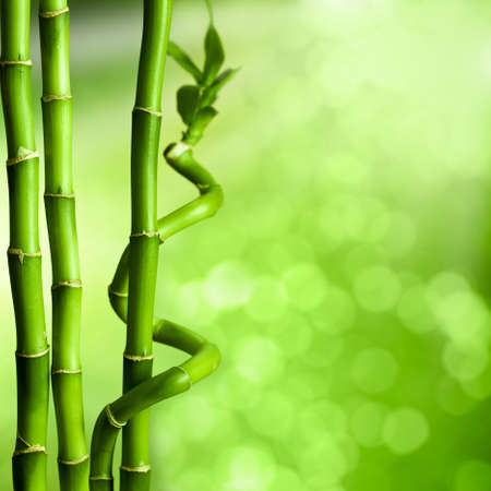 Bamboo - green natural background photo