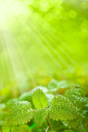 Fresh leaves on green background photo