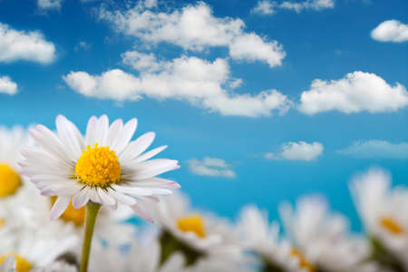 easter sunrise: Beautiful daisy and blue sky Stock Photo