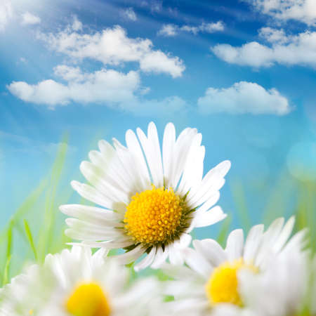 sol radiante: Verano - Daisy, cielo azul y el sol detr�s de Foto de archivo