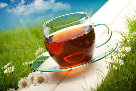 teepflanze: Teetasse