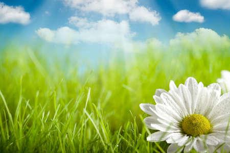 Natuur achtergrond - bloem op groen veld en een blauwe lucht Stockfoto