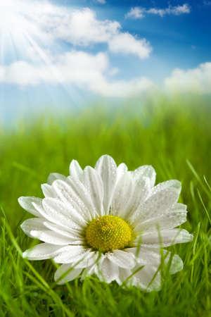 Beautiful flower on summer field photo