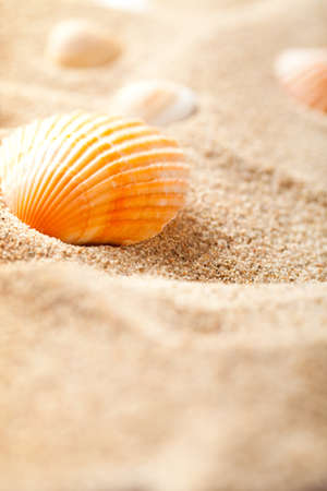 Shell on sand photo