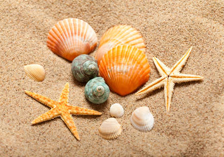Sea life - shells and starfish photo