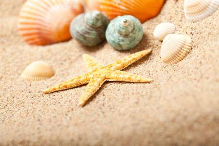 Starfish and shells photo