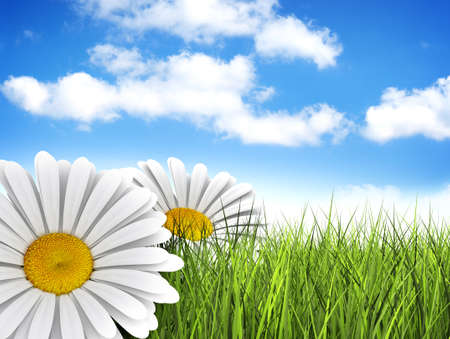 A perfect day - daisies in the meadow photo