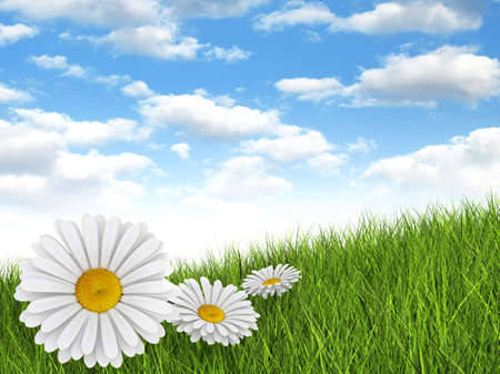 Nature background - daisies in the meadow and blue sky photo