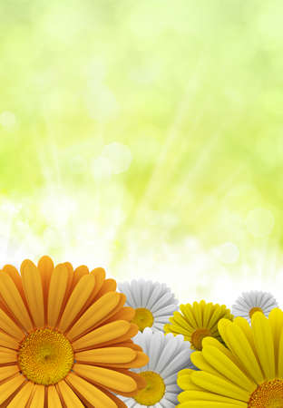 Spring flowers - nature background photo