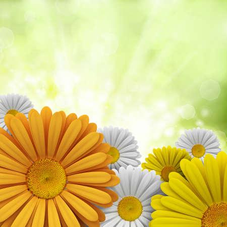 Flowers - Nature background photo