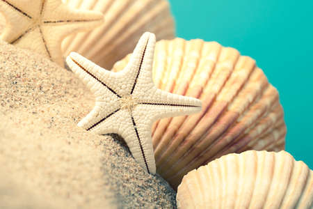 Starfish and seashells on sand photo
