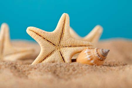 Starfish on beach photo