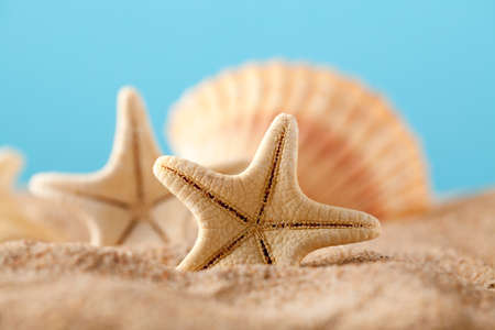 Starfish and shells on summer beach photo