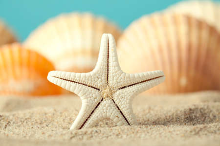 Starfish and seashell on beach photo