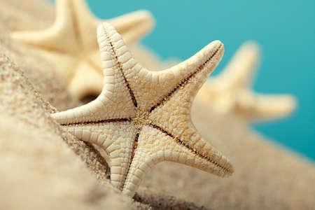 Starfishes in sand beach photo