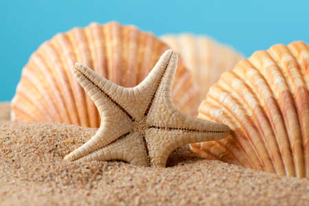 Starfish and seashells on sand photo
