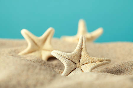 Starfishes in sand beach photo
