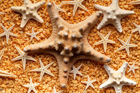 small stones: starfishes and small stones