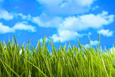 Green meadow on blue sky background