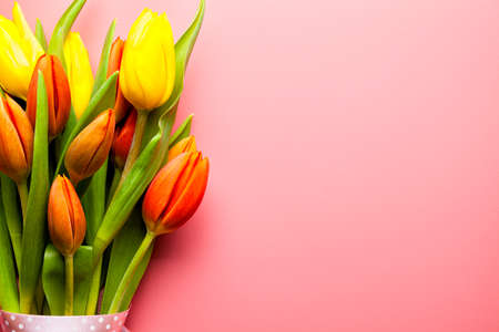 Bouquet of tulips - colorful flowers on a pink background Stock Photo