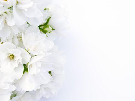 Jasmine Background photo