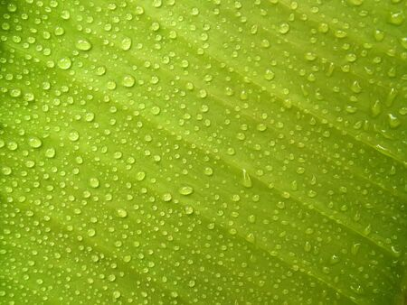 Green Leaf with Dew Drops Stock Photo - 6338781