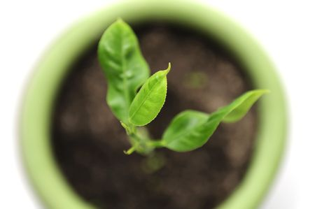 Green Plant in Flower Pot Stock Photo - 6701603