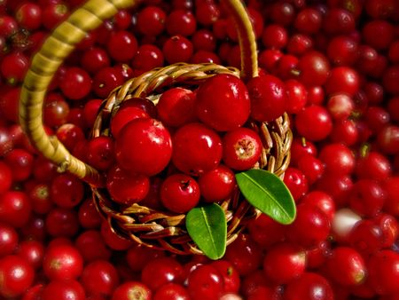 Basket Full of Cowberries Stock Photo - 6701800