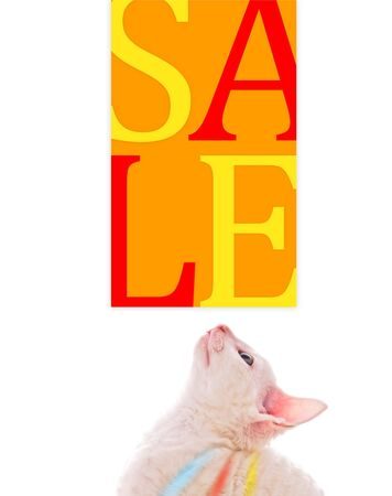 Cute Kitten Looking at Sale Poster Stock Photo - 6702059