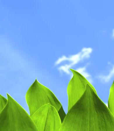 Green Leaves and Blue Sky Stock Photo - 6738484