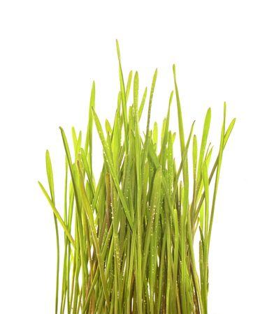 Lush Green Grass Stock Photo - 6738498