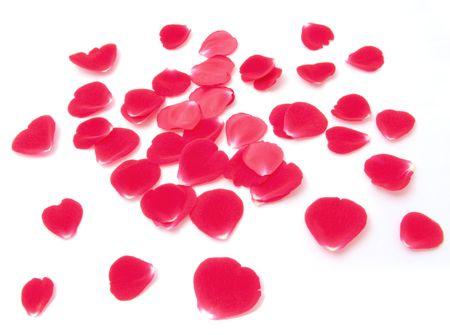 Rose Petals Stock Photo - 6776373
