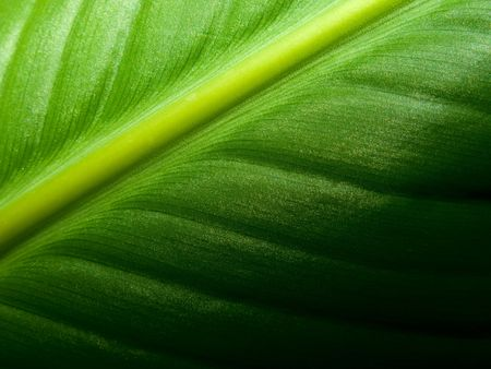 Fresh Green Leaf Stock Photo - 6776496