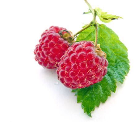 organic raspberry: Juicy Raspberries on Green Leaf