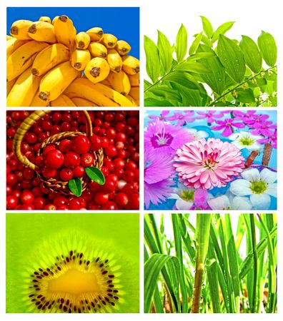Beautiful and Healthy Mix Stock Photo - 6822851