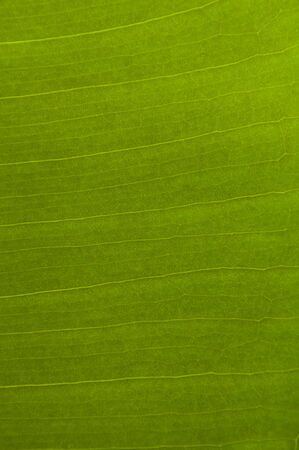 Green Leaf Texture Stock Photo - 6917246