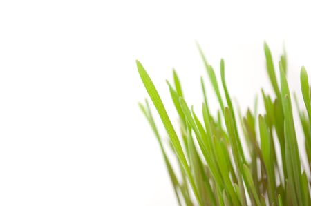 Green Grass Stock Photo - 6938393