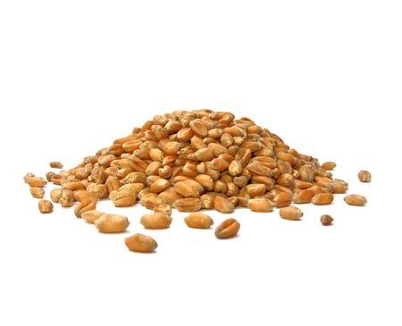 bulgur: Pile of Wheat Grains