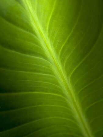 Green Leaf Stock Photo - 6938455
